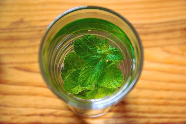 十款可自家用水種植的香草