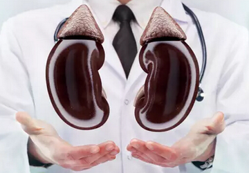保護腎臟很重要!身體的天然排毒系統~
