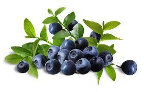 藍莓可以消滅產後抑鬱症?